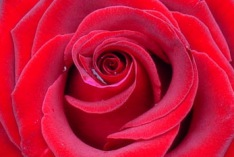 Día de San Valentín 2017