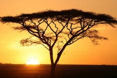 Día de África 2021