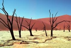 Día Mundial de Lucha contra la Desertificación y la Sequía 2019